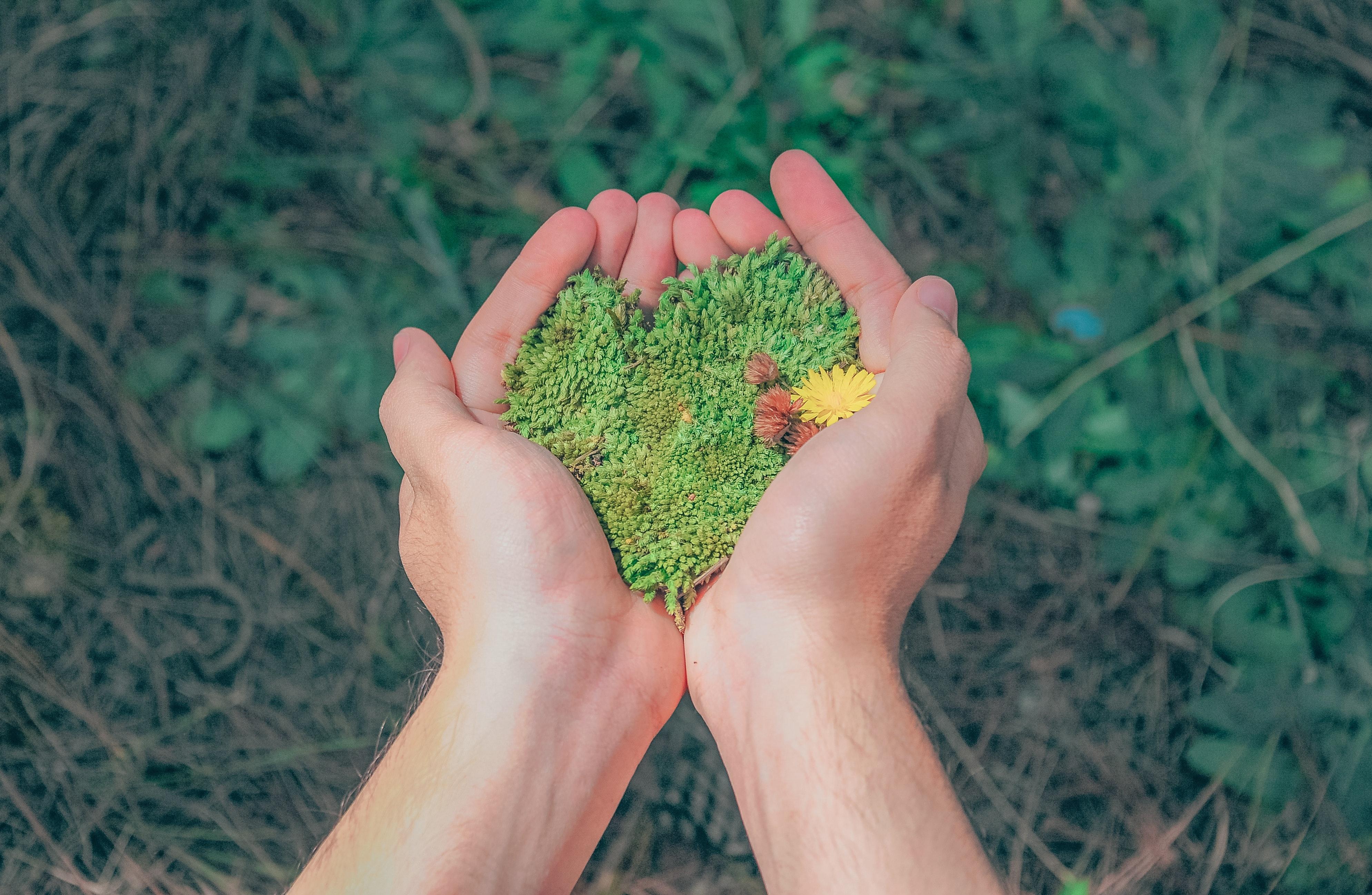 ambiente-flora